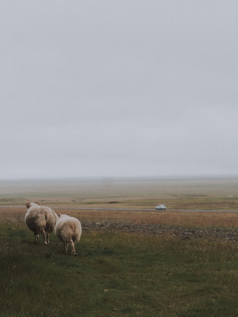 beginner guide to iceland by wedding photogrpaher from Reykjavik
